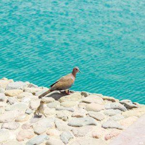 enjoying-the-company-of-the-sea-at-hurghada-egpypt